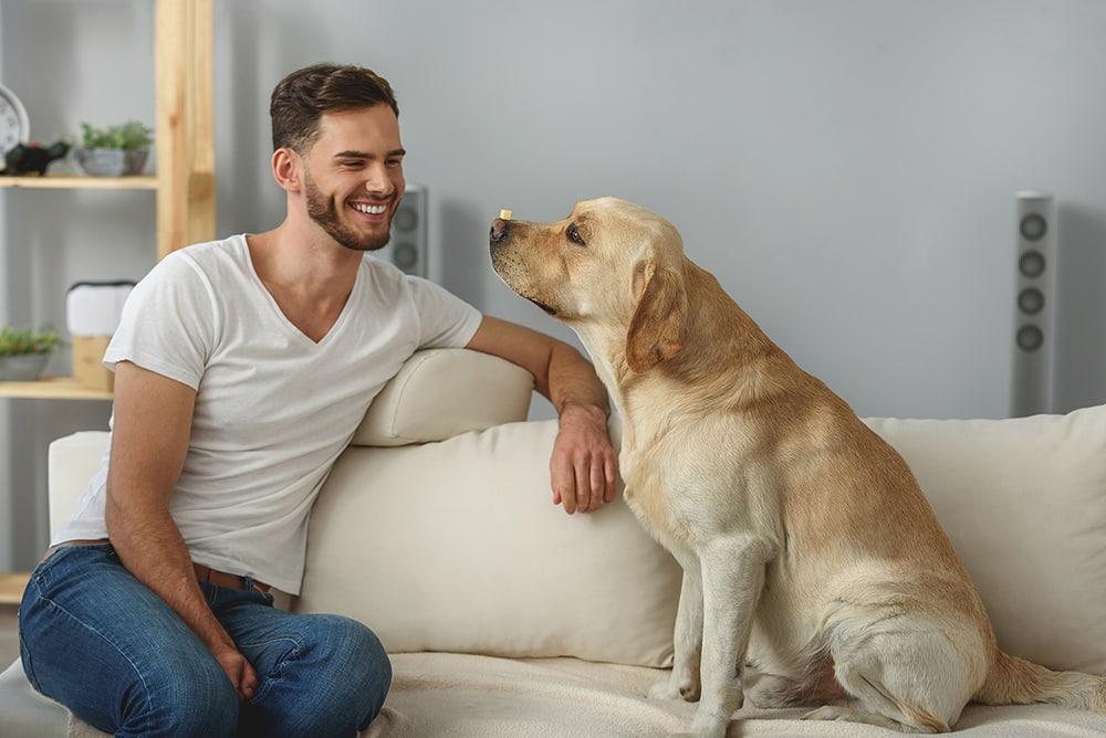 Best Way to Train a Dog
